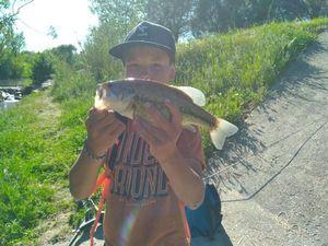 Largemouth Bass — Alexis Poulenas