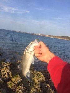 European Bass — Malo Colas