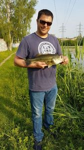 Largemouth Bass — Nicolas Douy