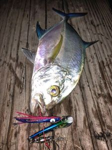 Bluefin Trevally — Mike Gantelme