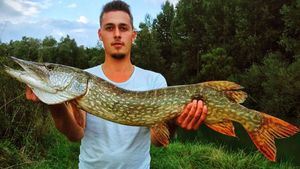 Northern Pike — Anthonin Coudiere