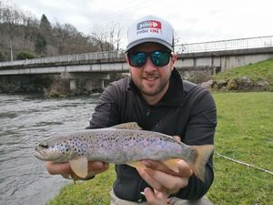 Brown Trout — Anthony Deloupe