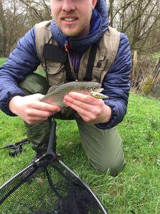 Rainbow Trout — Yohann Ruffin