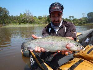 Rainbow Trout — Mendel Frankel