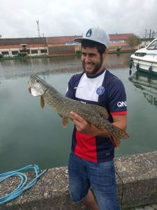 Northern Pike — Vincent Pes