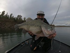 Largemouth Bass — Frédéric Jullian