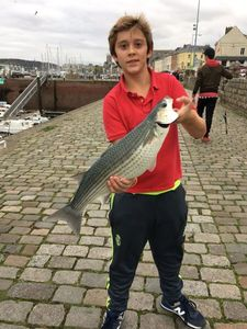 Thicklip Grey Mullet — Charly Paquet