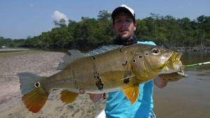 Peacock Bass (Tucunaré Intermedia) — Nicolas Xmylife