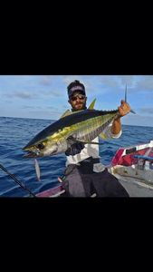Yellowfin Tuna — Raphael Du Merilis