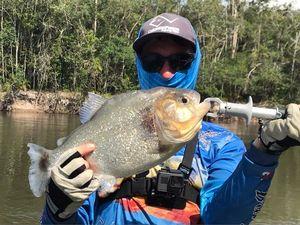 Manuel's Piranha — Angler's Madness (Vincent _b)
