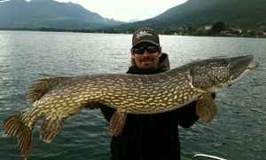 Northern Pike — David Mery