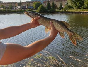 Northern Pike — Antoine Vnt