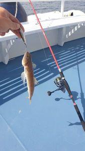 Atlantic Lizardfish — Thibault  Dominguez