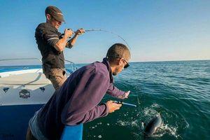 Bluefin Tuna — Samuel Elgrishi Moniteur et Guide de pêche