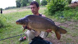 Common Carp — Richard Ringuet