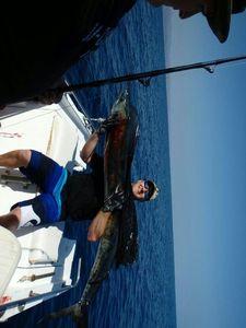 Atlantic Sailfish — Marty Marty