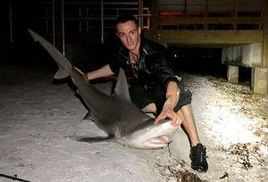 Requin Gris — Clément Faure