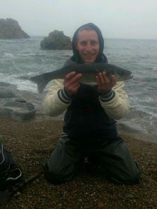 European Bass — nicolas caccialupi
