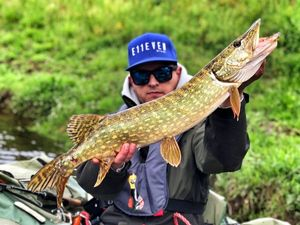 Northern Pike — Guillaume Nebo