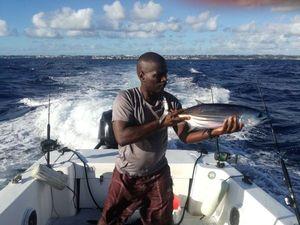 Thon a ventre raye — Elmondo Fishing
