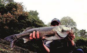 European Bass — Pierre-yves Le Goff