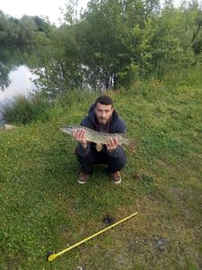 Northern Pike — Borgnefess Legolif