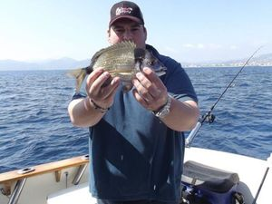 Common Two-Banded Seabream — Armand Bottero