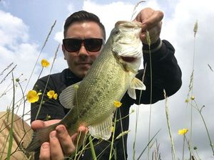 Largemouth Bass — Renaud Bertrand