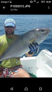 Greater Amberjack — Bruno  Cot