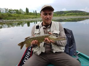 Northern Pike — Tof Tofder