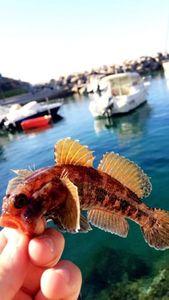 Black Goby — Adrien fishingriverandsea