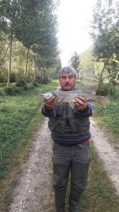 Northern Pike — Guy Lhomme