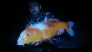 Koï Fish — Alexandre Philippe