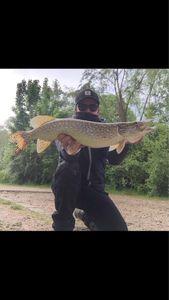 Northern Pike — Adriano Crossbow fisherman