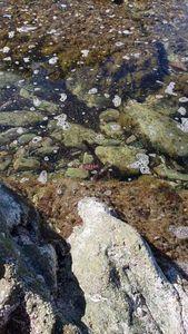 Common Octopus — Ben Benito Rockfishing