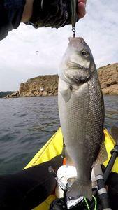 European Bass — Vincent Milane