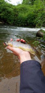 Common Trout — Aubin Delanoë