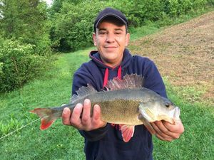 European Perch — Franck Beaufils