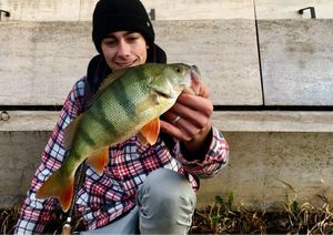 European Perch — Sacha Bosman Fishing
