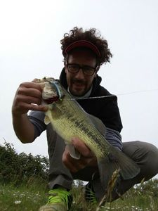 Largemouth Bass — Julien Double