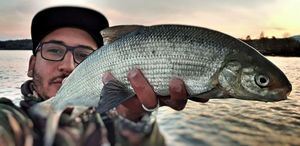 European Whitefish — Hicham Jost