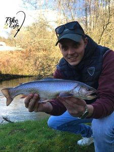 Brook Trout — Pike 2Life