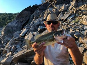 Largemouth Bass — Fish & Fils