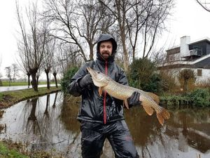 Northern Pike — Martin Malapelle