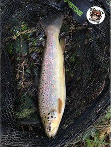 Brown Trout — Jordan Monkey Fishing