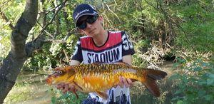Koï Fish — Dordess Treize