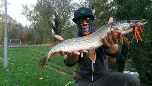 Northern Pike — Alessandro Bet