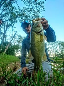 Largemouth Bass — Chriscarnafishing Christian Marcadet