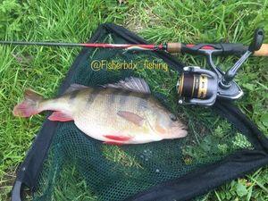 European Perch — Clement Colin insta: Fisherbdx_fishing