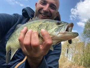 Largemouth Bass — Hervé Palas
